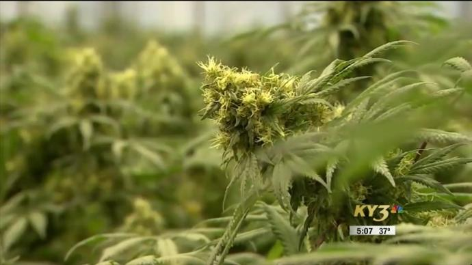 Patients Worried About Future Of Medical Marijuana